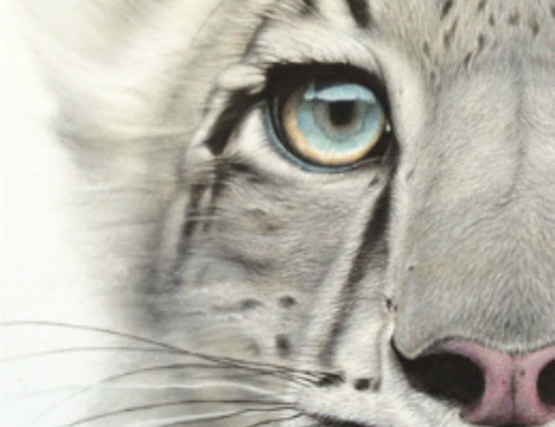 Snow Leopard by Martin Aveling