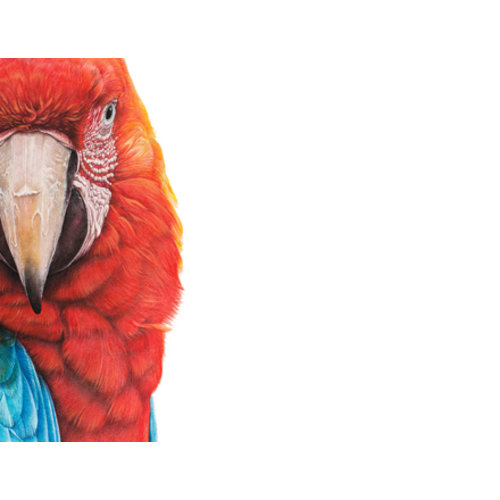 Macaw by Martin Aveling