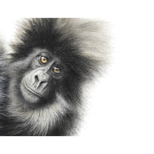 Mountain Gorilla by Martin Aveling