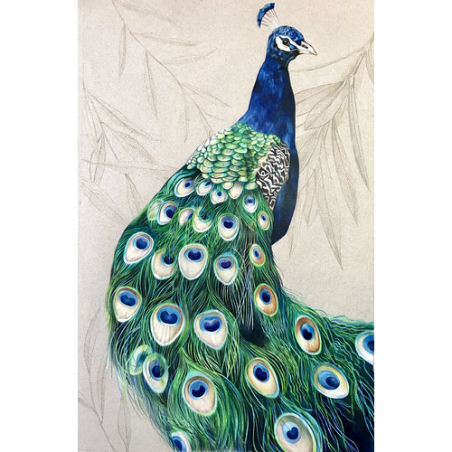 Peacock by Judith Selcuk