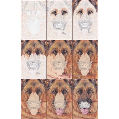 GSD Dog Progress Collage by LAW