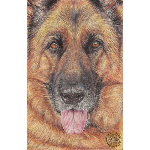 GSD Dog Portrait by LAW